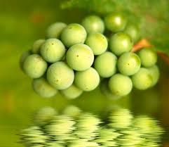 Balsamic-Vinegar-grapes